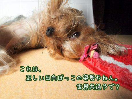 6_20100425140152.jpg