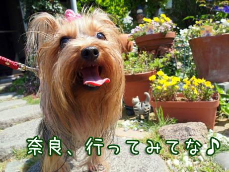 6_20100507193430.jpg