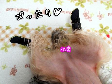6_20100514193757.jpg
