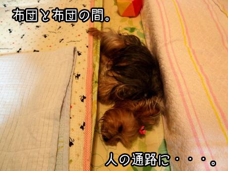 6_20100603152546.jpg