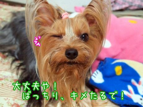 6_20100604173551.jpg