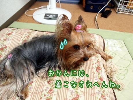 6_20100609154914.jpg