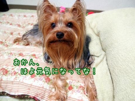 6_20100610174518.jpg