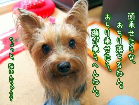 6_20100620085612.jpg