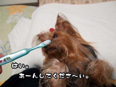 6_20100627165431.jpg
