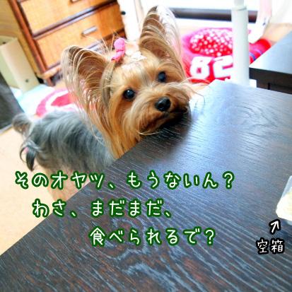 6_20100701164640.jpg