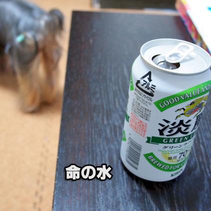 6_20100706190956.jpg