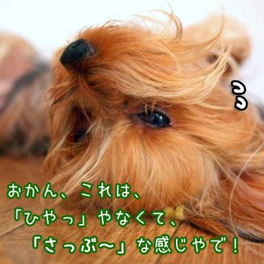 6_20100723195254.jpg