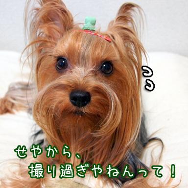 6_20100731193841.jpg