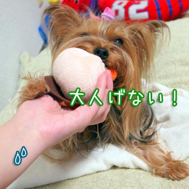 6_20100801194138.jpg
