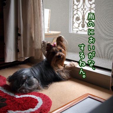 6_20100809172927.jpg