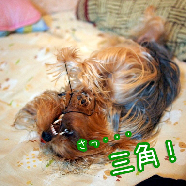 6_20100810201833.jpg