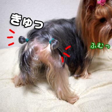 6_20100811190838.jpg