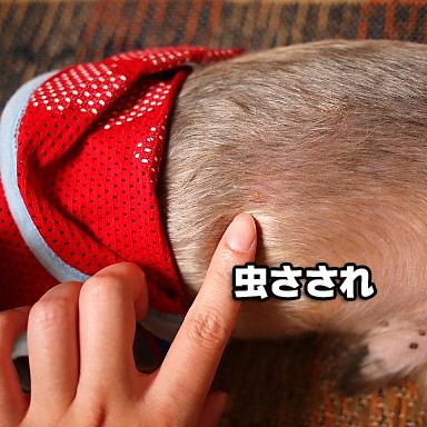 6_20100816195655.jpg