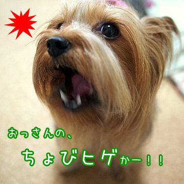 6_20100821192402.jpg