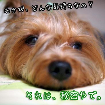 6_20100902170557.jpg