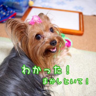 6_20100911192600.jpg