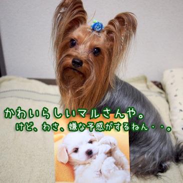 6_20101013200733.jpg