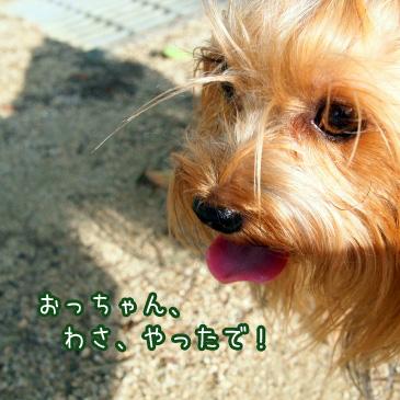 6_20101014201429.jpg