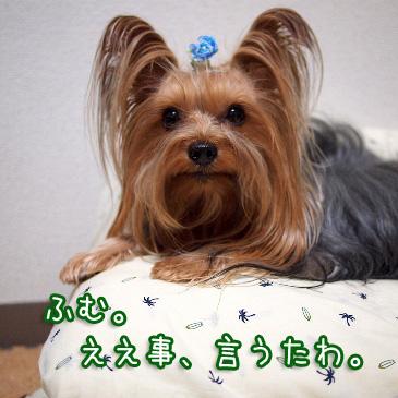 6_20101016191705.jpg