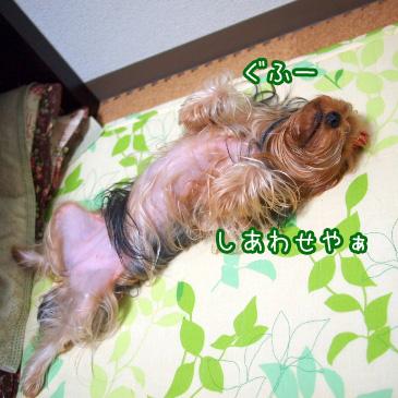 6_20101029191320.jpg
