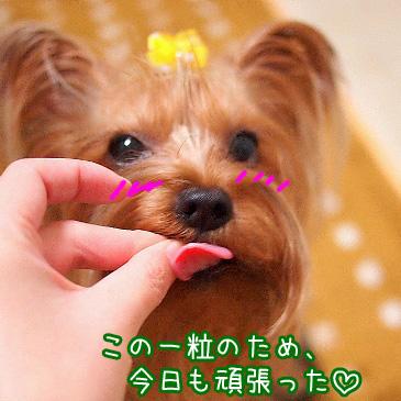 6_20101109195631.jpg