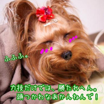 6_20101111192602.jpg