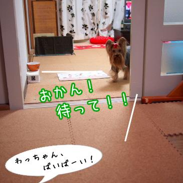 6_20101118190908.jpg