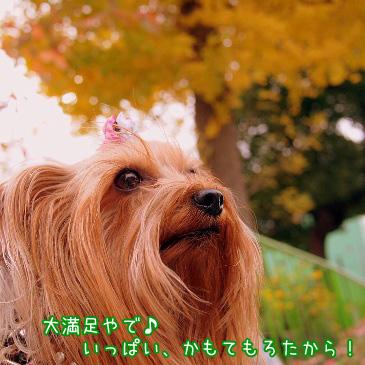 6_20101128184944.jpg