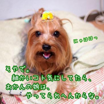6_20101209192943.jpg