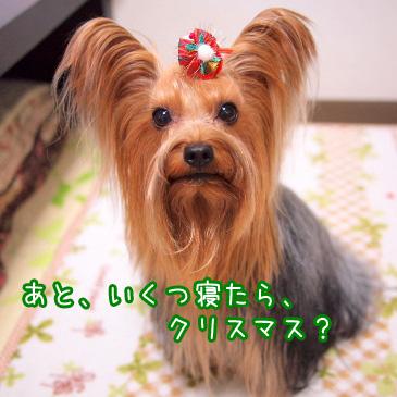 6_20101210194507.jpg