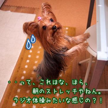 6_20101221212536.jpg