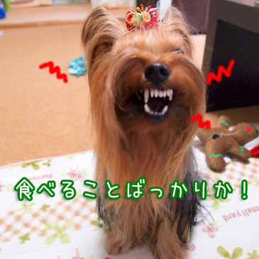 6_20101225160613.jpg