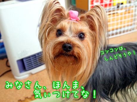 7_20100207141727.jpg