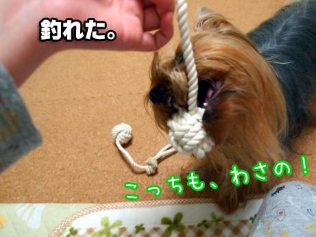 7_20100225193352.jpg