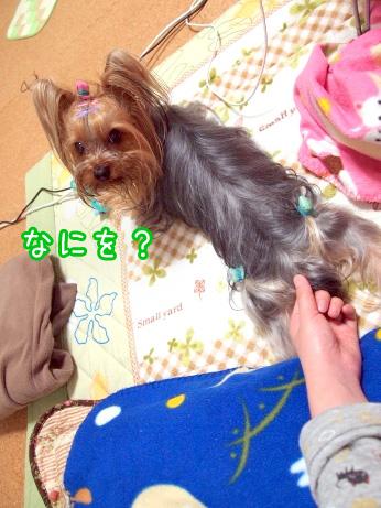 7_20100227192611.jpg