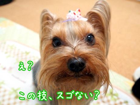 7_20100303190039.jpg