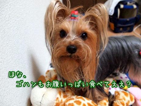 7_20100326193514.jpg