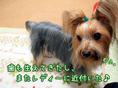 7_20100402191959.jpg