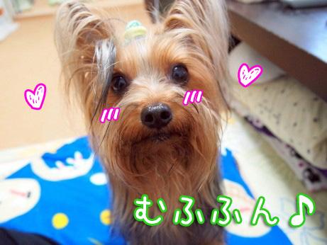 7_20100515191028.jpg