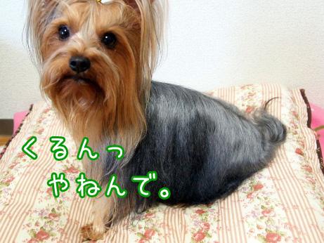 7_20100517192045.jpg