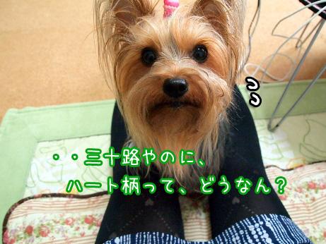 7_20100609154923.jpg