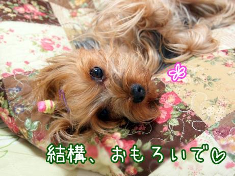 7_20100617183431.jpg