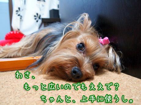 7_20100620085611.jpg