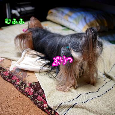 7_20100804191530.jpg