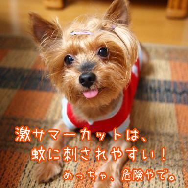 7_20100816195706.jpg