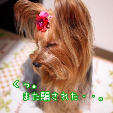 7_20101118190915.jpg