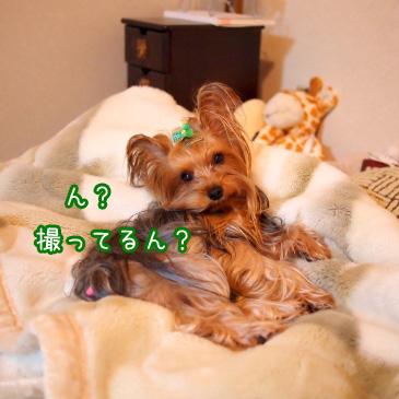 7_20101126193923.jpg