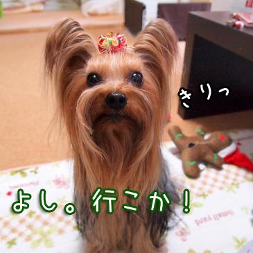 7_20101225160612.jpg