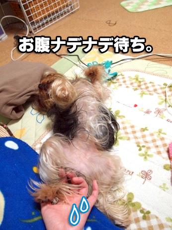 8_20100227192611.jpg